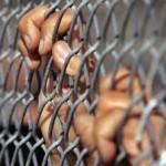 إخلاء موقوفين من محكمة قضايا الإرهاب