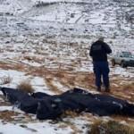 ارتفاع عدد ضحايا الثلوج على الحدود اللبنانية